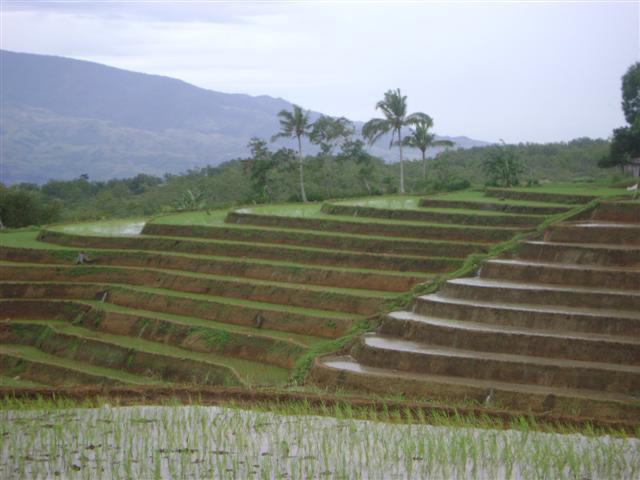 Rice Terraces in Negros?